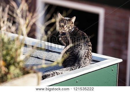 Young Cat Sitting On Roof.