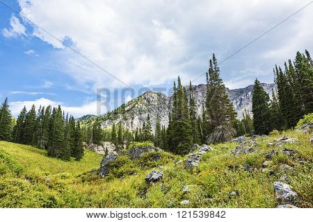 Alpine Meadows at Albion Basin, Utah