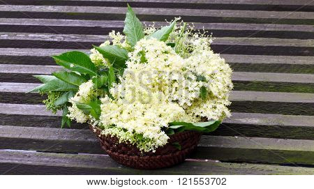 Collected Elderflower