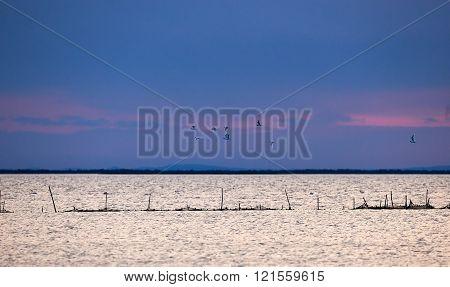 Seascape In Camargue