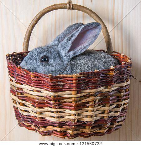 rabbit in wicker basket