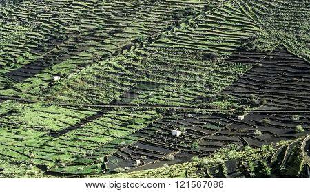 Fields In Lanzarote On Black Volcanic Soil