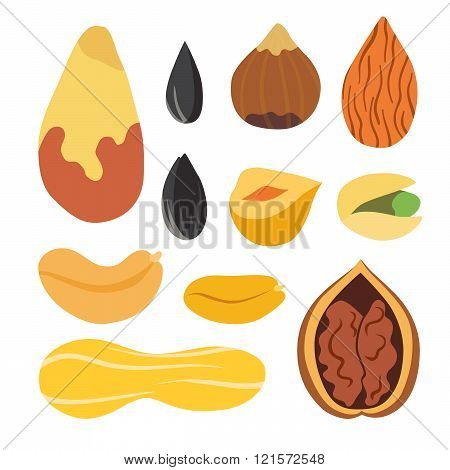 Nuts and seeds vector set. Isolated illustration on white background. Cartoon nuts.
