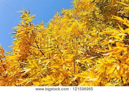 Beautifull Yellow Treetop