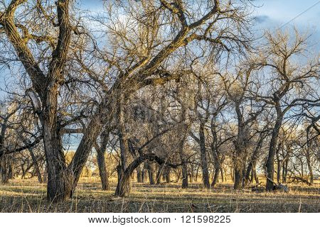 riparian forest ans pasture along South Platte River in eastern Colorado, early spring scenery in sunset light