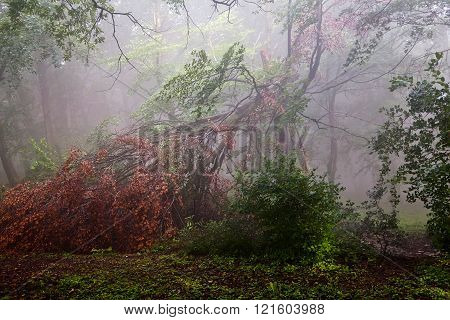 Broken Tree With Red Treetop