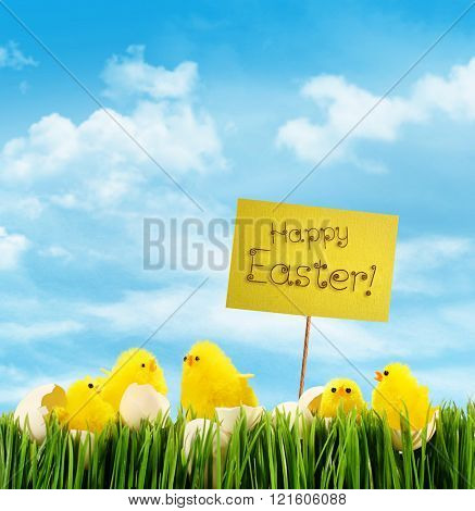 Easter chicks with sign against blue sky background