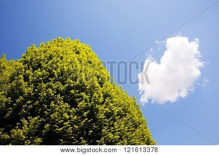 Treetop And Blue Sky