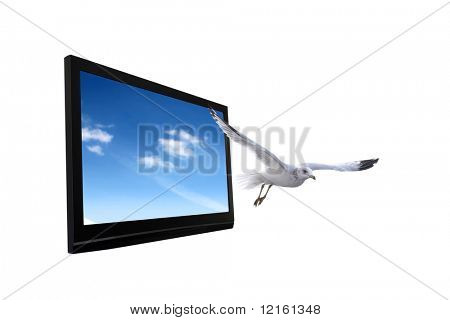 Plasma television with seagull flying out of it