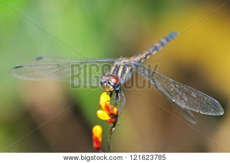 dragonfly resting on a flower with blur background