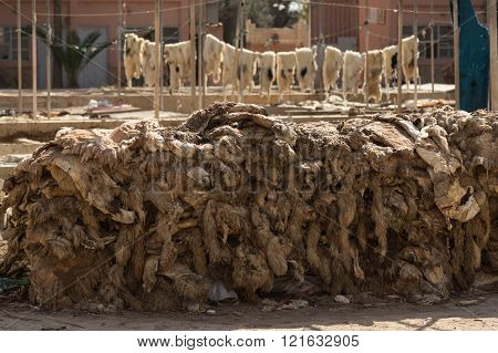 hides and wool at a tannery in Taraodant, Morocco