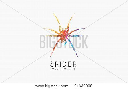 Spider logo design. Color spider logo. Creative logo. Colorful logo design.