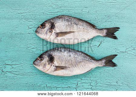 Fresh dorado fish. Copy space top view