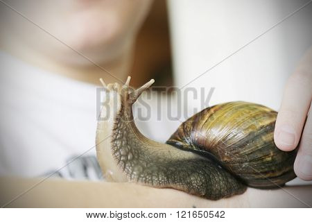 Snail on the hand