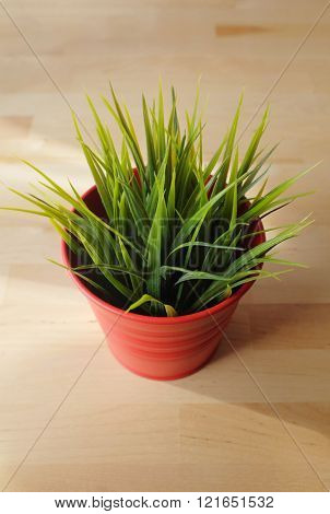 Young green grass blades on a red vase in the center of a wooden table