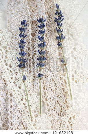 Lavender on lace