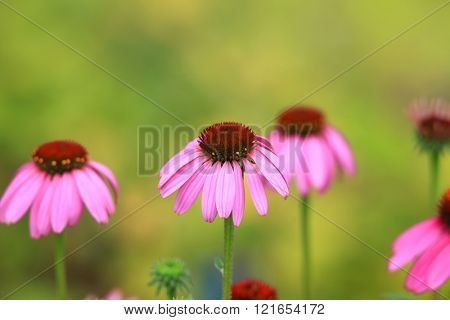 Close up shot of daisy flowers