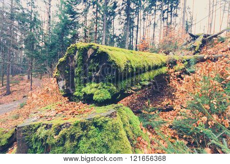 tree overgrown with moss inside forest