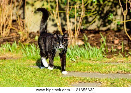 Adorable Housecat