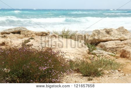 Landscape From The Sea To The Shore Background