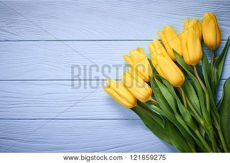Mothers Day background.Tulips bouquet on blue wood