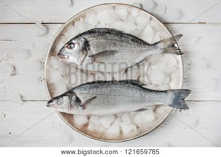 Dorado fish and sea bass on the metal plate with ice on the white wooden table