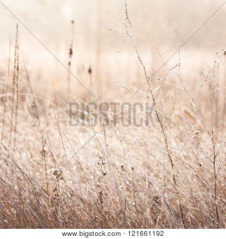 Sparkling Field