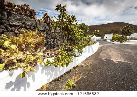 Tropical Cactus Garden In Guatiza Village, Lanzarote, Canary Islands, Spain
