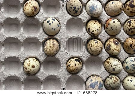 Quail eggs in the cardboard packing horizontal