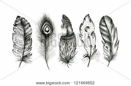 Set Of Hand Drawn Feathers On White Background. Boho Decoration