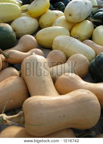 Bunch Of Squash