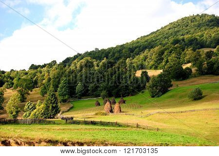 Wild forest mountains in Romania