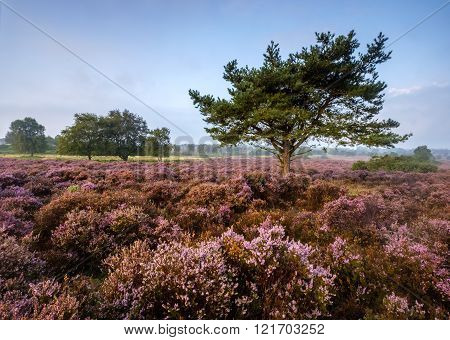 Westleton Heath