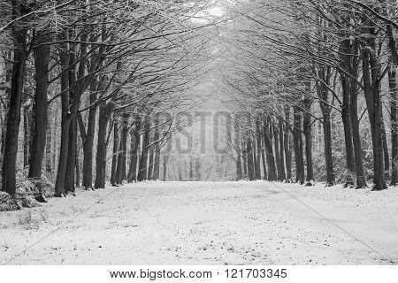 Felbrigg Trees In Snow