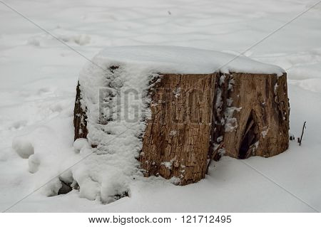 Beautiful winter image in park with fresh snow and rotten stump