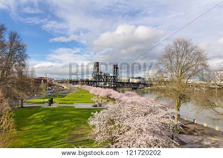 Cherry Blossom Tree At Waterfront Park