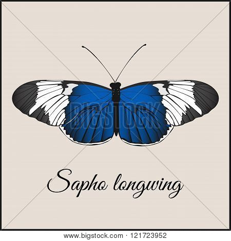Vintage card with butterfly. Minimal flat vector illustration. Sopho longwing. Lettering handwriting