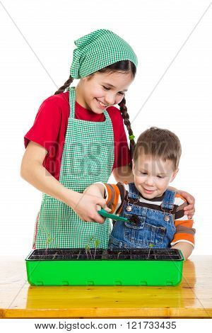 Two kids learning planting the seedling