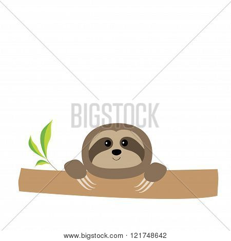 Sloth Face And Hands. Cute Cartoon Character. Tree Branch Wild Joungle Animal Collection. Baby Educa