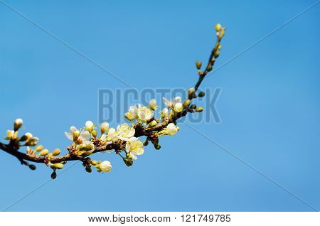 Flowers Of The Blossoms On A Spring Day