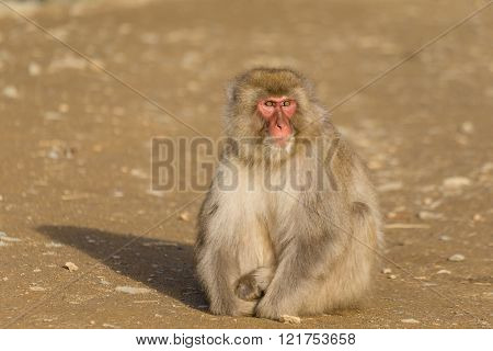Monkey sitting on ground