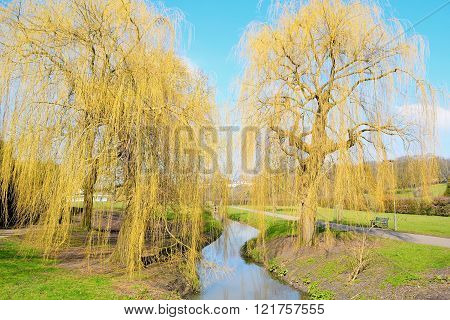 WILLOWS AND RIVER