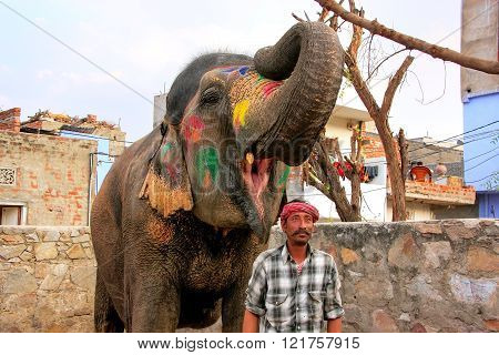 JAIPUR, INDIA - FEBRUARY 26: Unidentified man stands with painted elephant at a small elephant quarters on February 26, 2011 in Jaipur, India. Elephants are used for rides and other tourist activities in Jaipur.
