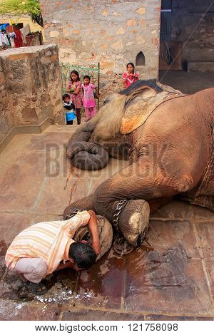JAIPUR, INDIA - FEBRUARY 26: Unidentified man cleans elephant's foot at a small elephant quarters on February 26, 2011 in Jaipur, India. Elephants are used for rides and other tourist activities in Jaipur.