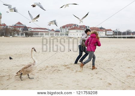 Two women run away from the swan and seagulls on the beach at spring time