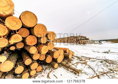 logs closeup, pine logs, russian winter, sawmill, russian sawmill