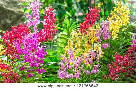 Garden with colorful orchids in spring sunshine