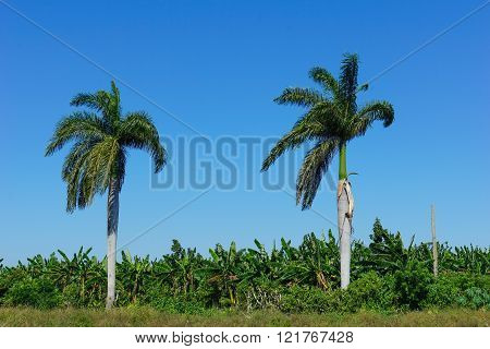 Tropical Agricultural Land