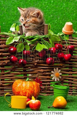 Cute kitten sitting on the bright artificial grass over decorative wattle fence background