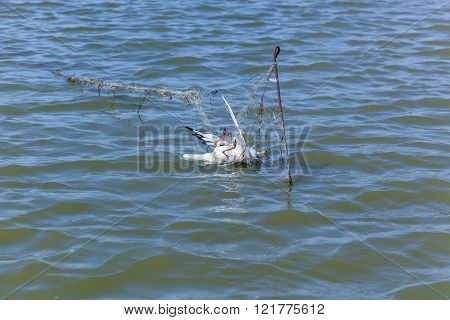 Dead seagull hit the fishing nets dead bird because of the people